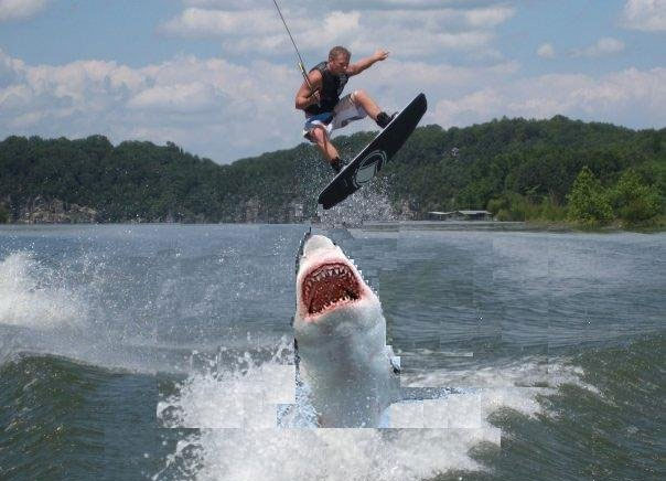 jumping the shark